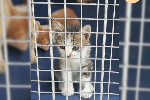 Rescued stray cats in PDEA NHQ / Facebook / PDEA