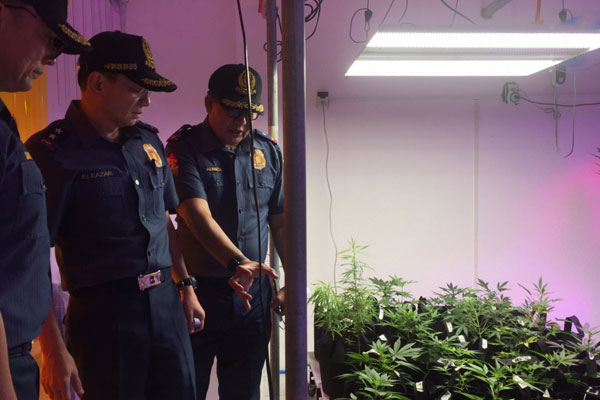 Marijuana Plantation uncovered in San Juan / NCRPO PIO