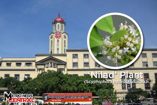 MNC Photo File
