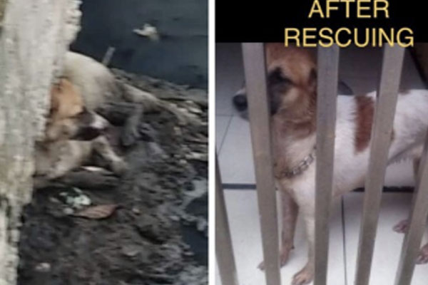 Dog rescued by Makati Veterinary Services Office (VSO) / Makati PIO