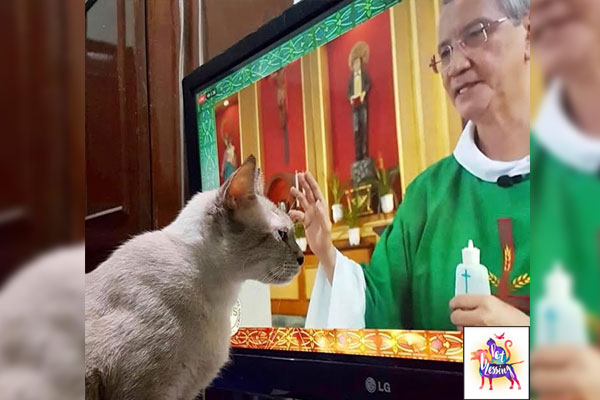 Priest in photo: Rev. Fr. Jose Antonio