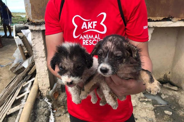 San Miguel Corporation (SMC) together with partner animal welfare organization Animal Kingdom Foundation (AKF), have mounted an animal rescue operation in Taliptip, Bulakan, Bulacan, to ensure some 70 abandoned domestic animals are retrieved and brought to a shelter in Capas, Tarlac. They will be given veterinary treatment and nursed back to health until they can be re-homed.
