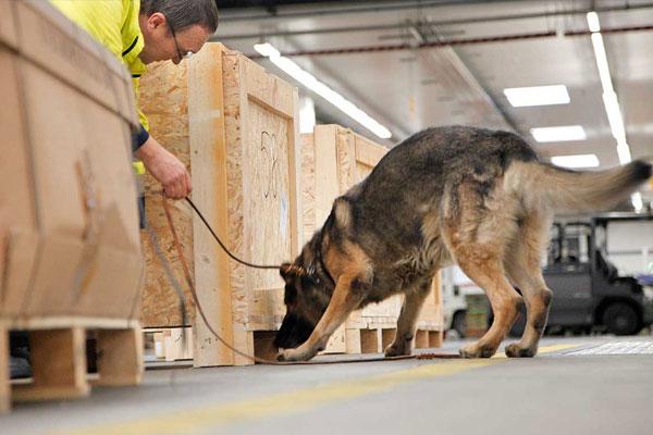 Photo Courtesy of lufthansa-cargo.com