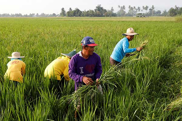 Philippine Farmer